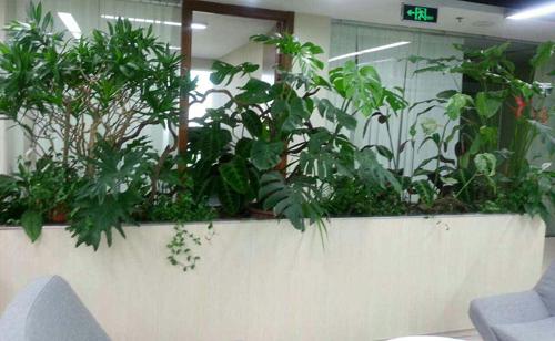 植物租赁区别于传统的花卉销售而是