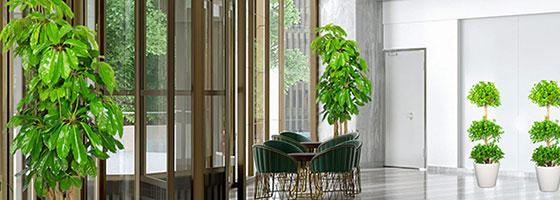 室内绿植出租 绿化租摆 出租盆栽 租花卉 办公室